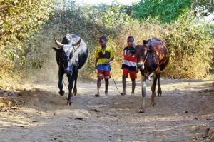 """<p>Séjour inédit, enclavé entre le Burundi et l'Uganda, venez découvrir le Rwanda, plus réputé pour son actualité politique, il regorge pourtant d'attraits touristiques et de trésors caché ......</p><div class=""""more""""><a href=""""http://ffct.org/randonner-a-velo/ou-quand-pratiquer/sejours-et-voyages/rwanda/"""" target=""""_blank"""" title=""""Rwanda"""" >Lire la suite</a></div>"""