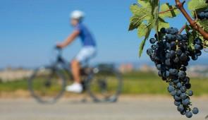"""<p>Dans le cadre du festival viticole et gourmand, venez découvrir à vélo le Bourbonnais et les vignobles Saint-Pourcinois. Vous emprunterez les plus belles routes du département et découv ......</p><div class=""""more""""><a href=""""http://ffct.org/randonner-a-velo/ou-quand-pratiquer/sejours-et-voyages/festival-viticole-et-gourmand/"""" target=""""_blank"""" title=""""Festival viticole et gourmand"""" >Lire la suite</a></div>"""