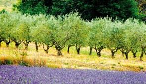 """<p>Culture, patrimoine historique et préhistorique, nature sauvage et singulière, mais aussi vignobles et champs de lavande, bon vin et bonne chère… une explosion de couleurs chaudes et oc ......</p><div class=""""more""""><a href=""""http://ffct.org/randonner-a-velo/ou-quand-pratiquer/sejours-et-voyages/le-luberon-un-avant-gout-dete-4/"""" target=""""_blank"""" title=""""Le Lubéron, un avant goût d'été"""" >Lire la suite</a></div>"""