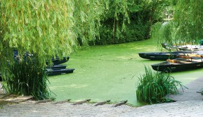 """<p> Les hébergements seront répartis autour d'un manoir du XVIIe siècle proche d'une rivière dominant la vallée de la Gartempe. Chaque jour, deux randonnées vous seront proposées, vous per ......</p><div class=""""more""""><a href=""""https://ffct.org/randonner-a-velo/ou-quand-pratiquer/sejours-et-voyages/entre-brenne-et-marais-poitevin/"""" target=""""_blank"""" title=""""Entre Brenne et Marais Poitevin"""" >Lire la suite</a></div>"""