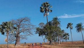 """<p> Venez découvrir ce nouveau circuit avec ses petites routes tranquilles, ses plages de sable blanc bordées de cocotiers et son climat unique en hiver. Petite perle du bout du monde, la  ......</p><div class=""""more""""><a href=""""http://ffct.org/randonner-a-velo/ou-quand-pratiquer/sejours-et-voyages/senegal-la-casamance/"""" target=""""_blank"""" title=""""Sénégal – La Casamance"""" >Lire la suite</a></div>"""
