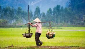 """<p> Depuis Hanoï, après avoir vogué dans la baie d'Ha Long, vous traverserez une partie du Tonkin vers l'est ; la diversité et la beauté des ethnies, vous étonnera. Vous rejoindrez, ensuit ......</p><div class=""""more""""><a href=""""https://ffct.org/randonner-a-velo/ou-quand-pratiquer/sejours-et-voyages/laos/"""" target=""""_blank"""" title=""""Laos"""" >Lire la suite</a></div>"""