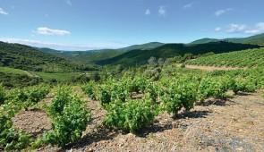 """<p> Randonnées en plein coeur du Parc naturel régional du Haut-Languedoc, aux portes du Larzac et en bordure de la Grande bleue. Vous pédalerez dans les vignes et les champs d'oliviers et  ......</p><div class=""""more""""><a href=""""http://ffct.org/randonner-a-velo/ou-quand-pratiquer/sejours-et-voyages/les-mille-et-une-richesses-du-languedoc-2/"""" target=""""_blank"""" title=""""Les mille et une richesses du Languedoc"""" >Lire la suite</a></div>"""