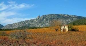 À travers le vignoble de la blanquette de Limoux. (c) D.R.
