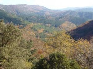 Couleurs d'automne sur un moutonnement de collines.