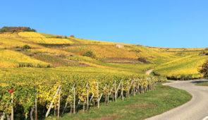 """<p>Un condensé de beauté et de plaisir ! Avec ses châteaux médiévaux, les jolis villages colorés et maisons à colombages fleuris, le vignoble alsacien est une véritable bénédiction pour le ......</p><div class=""""more""""><a href=""""https://ffct.org/randonner-a-velo/ou-quand-pratiquer/sejours-et-voyages/les-perles-du-vignoble/"""" target=""""_blank"""" title=""""Les perles du vignoble"""" >Lire la suite</a></div>"""