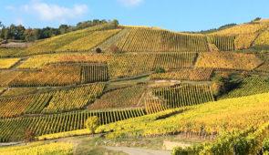 """<p>Avec ses jolis villages colorés et ses maisons à colombage fleuries, l'Alsace offre un véritable paysage de carte postale. Dans ce décor féérique, vous parcourrez le tour d'Alsace entre ......</p><div class=""""more""""><a href=""""https://ffct.org/randonner-a-velo/ou-quand-pratiquer/sejours-et-voyages/la-route-des-vins/"""" target=""""_blank"""" title=""""La route des vins"""" >Lire la suite</a></div>"""