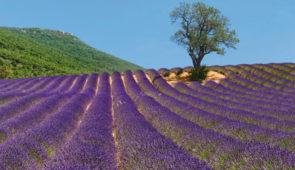 """<p>Une ouverture de saison en Provence, cela vous tente ? Sous le regard bienveillant du """" Géant de Provence """", qui arbore en cette période une belle couronne blanche avec souvent la tête  ......</p><div class=""""more""""><a href=""""https://ffct.org/randonner-a-velo/ou-quand-pratiquer/sejours-et-voyages/a-lombre-du-geant-de-provence/"""" target=""""_blank"""" title=""""À l'ombre du Géant de Provence"""" >Lire la suite</a></div>"""