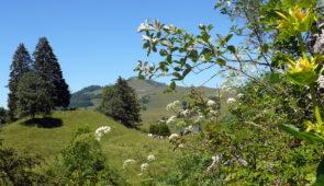 """<p>V enez découvrir les nombreuses plantations de noyers ainsi que le grand séchoir de Vinay, qui font la renommée de l'Isère. Chaque jour plusieurs parcours seront proposés avec un regrou ......</p><div class=""""more""""><a href=""""https://ffct.org/randonner-a-velo/ou-quand-pratiquer/sejours-et-voyages/lieux-pittoresques-de-lisere/"""" target=""""_blank"""" title=""""Lieux pittoresques de l'Isère"""" >Lire la suite</a></div>"""