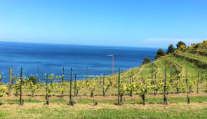 """<p>La Romagne est tout simplement synonyme de vélo ! Avec ses routes et paysages fabuleux, son chaleureux accueil et sa cuisine raffinée. Vous roulerez sur de superbes circuits dans l'arri ......</p><div class=""""more""""><a href=""""https://ffct.org/randonner-a-velo/ou-quand-pratiquer/sejours-et-voyages/italie-8/"""" target=""""_blank"""" title=""""Italie"""" >Lire la suite</a></div>"""