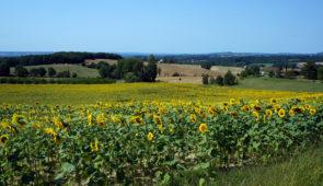 """<p>La position du camping de Pardaillan à Gondrin, au nord-ouest du département du Gers, vous permettra de découvrir plusieurs facettes de la Gascogne. Les circuits en boucle, vous conduir ......</p><div class=""""more""""><a href=""""https://ffct.org/randonner-a-velo/ou-quand-pratiquer/sejours-et-voyages/escapade-en-gascogne/"""" target=""""_blank"""" title=""""Escapade en Gascogne"""" >Lire la suite</a></div>"""