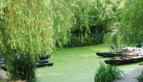 """<p>Venez visiter les 10 0000 hectares des fameux marais Poitevin et profiter de la proximité du site de la grande boucle. Cette Venise verte véritable cathédrale de verdure, vous entraîner ......</p><div class=""""more""""><a href=""""https://ffvelo.fr/randonner-a-velo/ou-quand-pratiquer/sejours-et-voyages/suivre-la-grande-boucle/"""" target=""""_blank"""" title=""""Suivre la grande boucle"""" >Lire la suite</a></div>"""