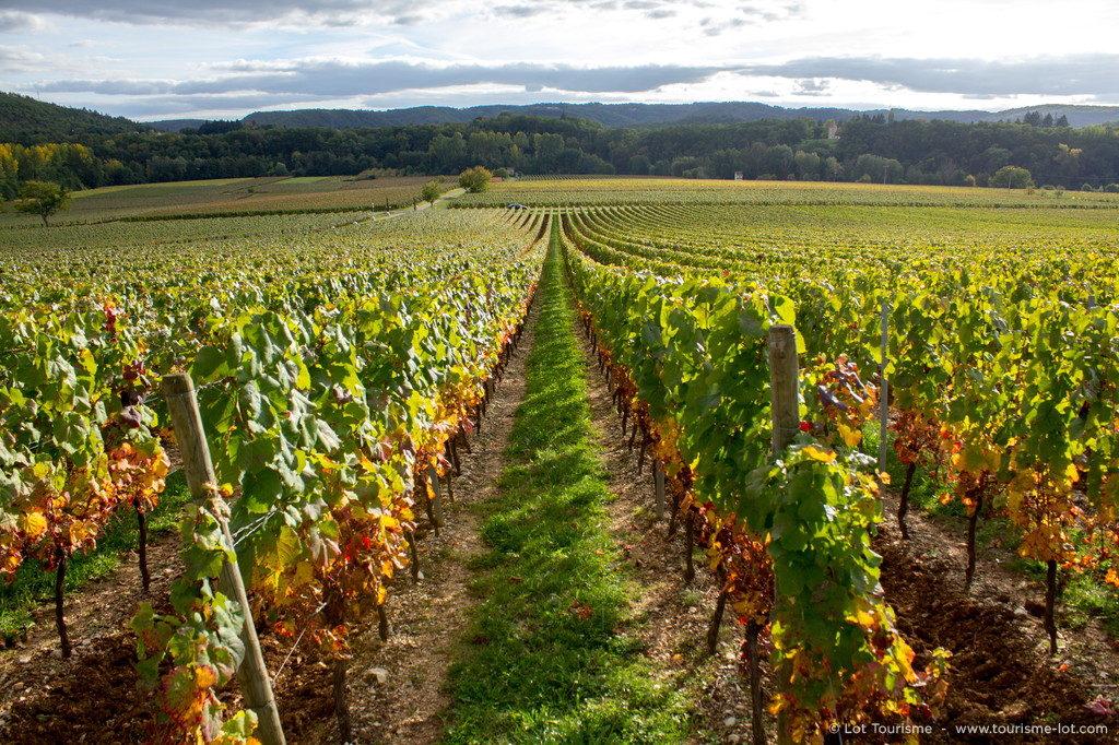Vignes du château de Caïx © Lot Tourisme - C. Novello