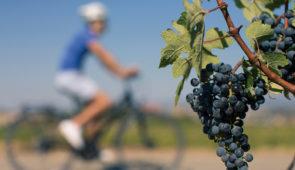 """<p>Vous pédalerez dans les vignobles languedociens, entre mer et montagnes au bord du Parc naturel régional du Haut-Languedoc, aux portes du Larzac. Au cours de ce séjour cyclotouriste et  ......</p><div class=""""more""""><a href=""""https://ffvelo.fr/randonner-a-velo/ou-quand-pratiquer/sejours-et-voyages/mille-et-une-richesses/"""" target=""""_blank"""" title=""""Mille et une richesses"""" >Lire la suite</a></div>"""