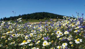 """<p>Situé dans le parc des volcans d'Auvergne, vous marcherez entre chemins, sentiers et rivières à la rencontre d'une nature très animée. Sur la route des estives, vous visiterez : des bur ......</p><div class=""""more""""><a href=""""https://ffvelo.fr/randonner-a-velo/ou-quand-pratiquer/sejours-et-voyages/rando-pedestre/"""" target=""""_blank"""" title=""""Rando pédestre"""" >Lire la suite</a></div>"""