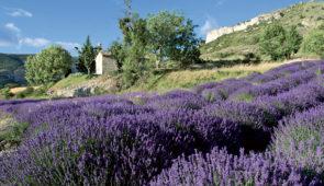 """<p>La saison des lavandes en Provence, cela vous tente ? Venez découvrir les monts de Provence, longer les gorges de la Nesque et découvrir la belle vallée du Toulourenc. Vous traverserez  ......</p><div class=""""more""""><a href=""""https://ffvelo.fr/randonner-a-velo/ou-quand-pratiquer/sejours-et-voyages/a-lombre-du-geant-de-provence-2/"""" target=""""_blank"""" title=""""À l'ombre du géant de provence"""" >Lire la suite</a></div>"""