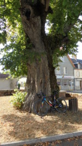 L'arbre séculaire d'Anzème, BPF 23, Province de la Marche © R. Baldellon
