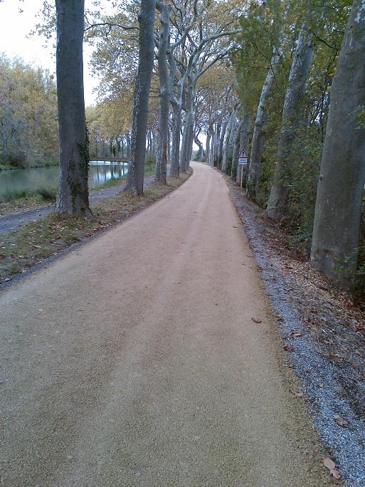 Un beau tapis que les feuilles vont bientôt recouvrir